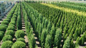 Крупный питомник растений в Рязани